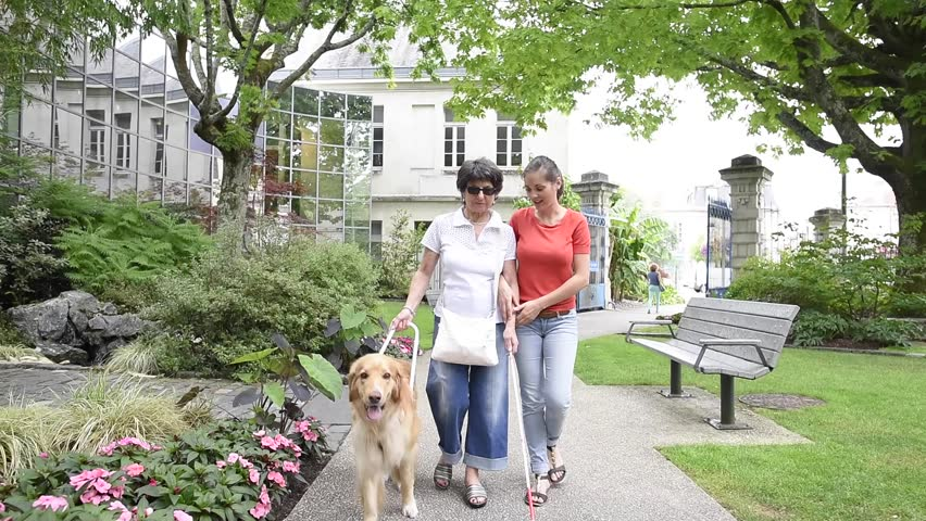 Senior blind woman walking with help of dog and carer #18456841