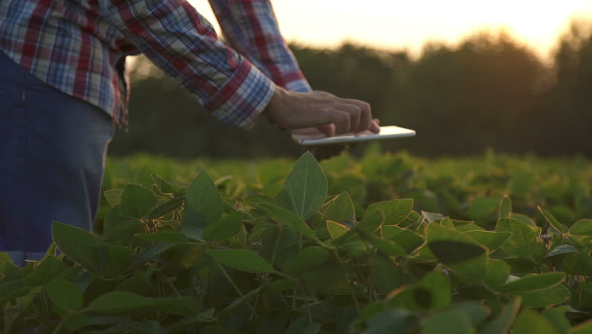 Farmer at sunset in a field with a tablet computer. Slow motion | Shutterstock HD Video #18505544