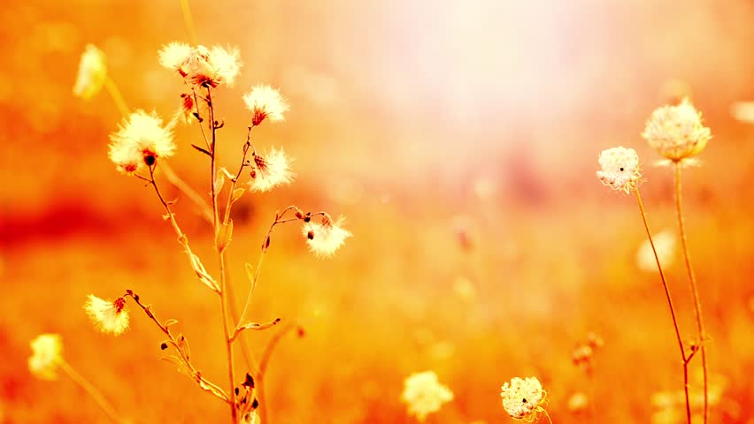 Nature Flower Beautiful Background Pictures
