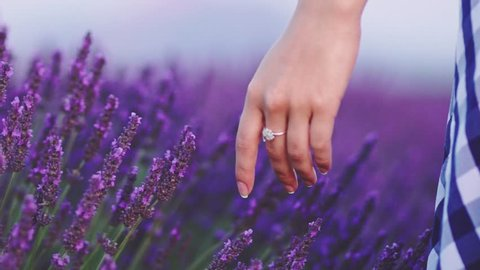Close-up of woman's hand running through lavender field. SLOW MOTION 120 fps. Girl's hand touching purple lavender flowers closeup. Plateau du Valensole, Provence, South France, Europe.