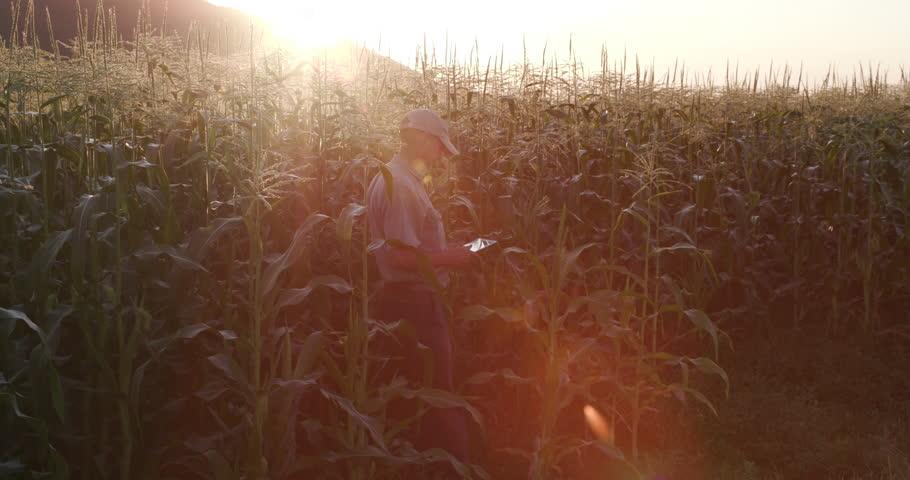 4K Backlit shot of farmer with digital tablet inspecting cornfields | Shutterstock HD Video #18610187
