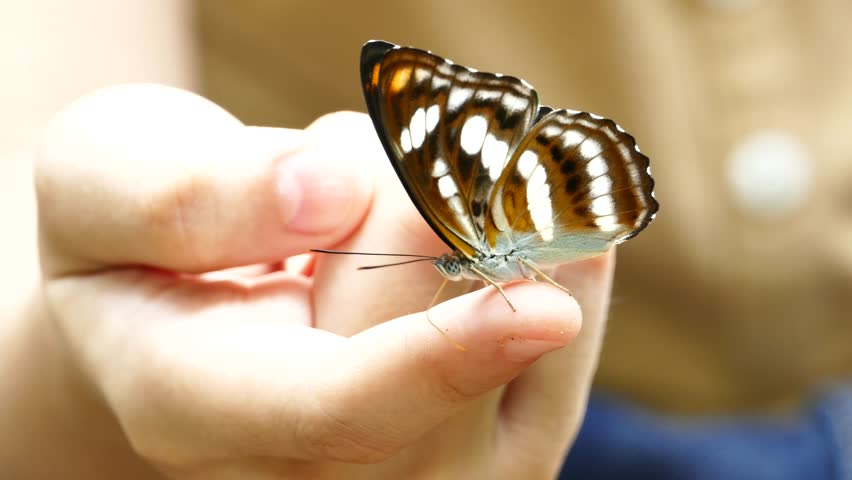 Butterfly in hand pictures