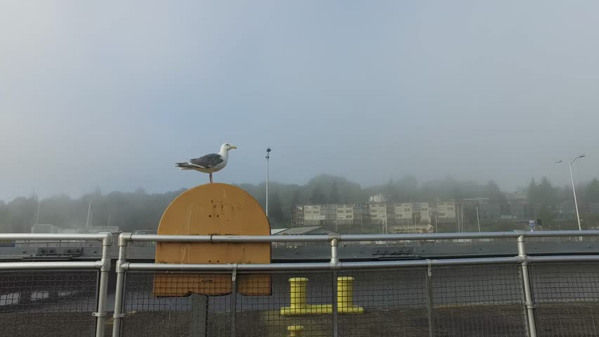 A seagull on a foggy morning. 4k.  #18902468