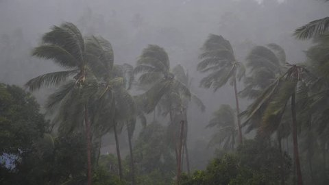 Tropical Palm Trees During Hurricane with Heavy Rain