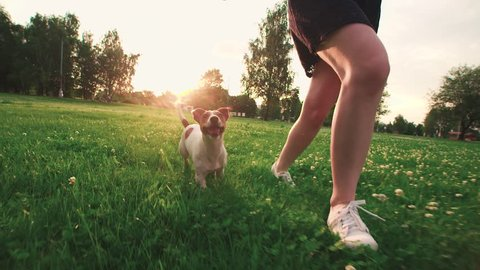 Jack Russell Terrier dog next to a girl happily running through the grass in the nature Park, slow motion