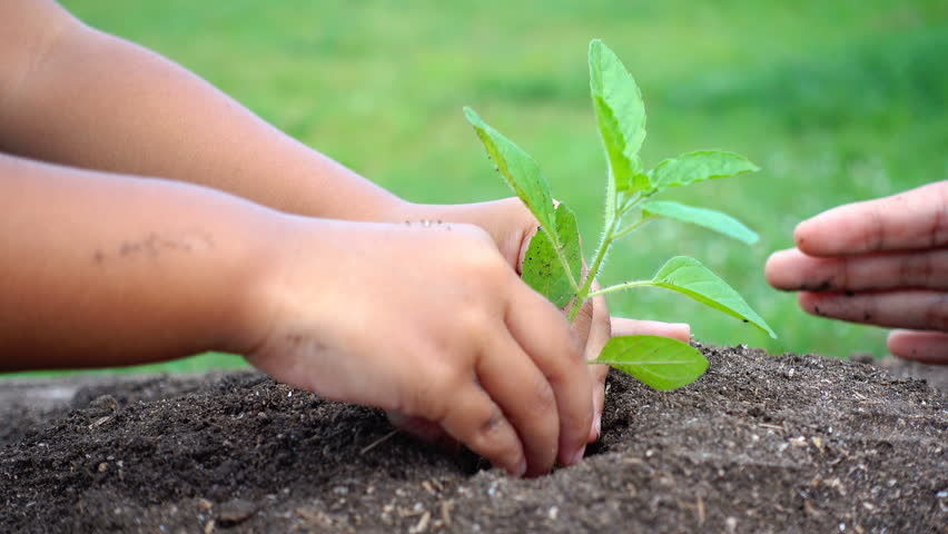 Woman and child hand planting small tree in the soil together.