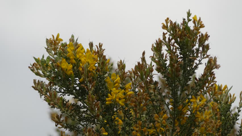 Header of Magnoliopsida