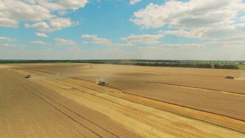 Harvester in wheat rye field 4k video. Harvest agriculture farm rural landscape. Bread production concept: combine crops grain.