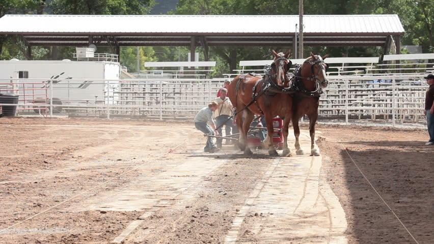 MANTI, UTAH - AUG 11: Draft horse team with teamwork pulling heavy sled in county fair competition on August 11, 2011 in Manti, Utah.. Requires 27 feet pull to win.