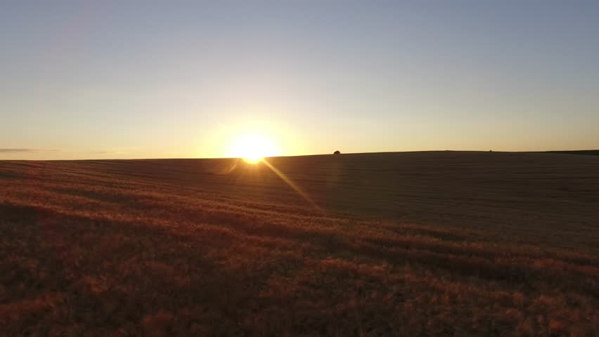 Beautifully Golden Wheat Field a Beautiful Sky | Shutterstock HD Video #19492981