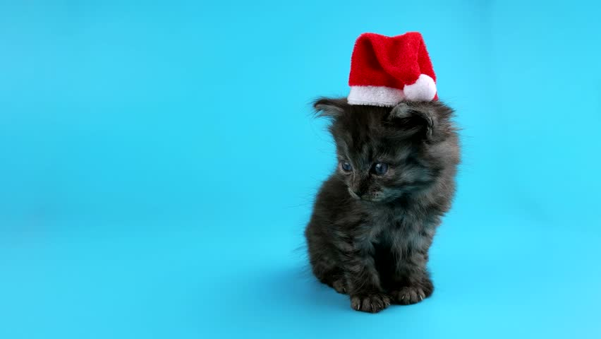 Christmas cat in red Santa Claus hat, looking around and meows, ready to keying