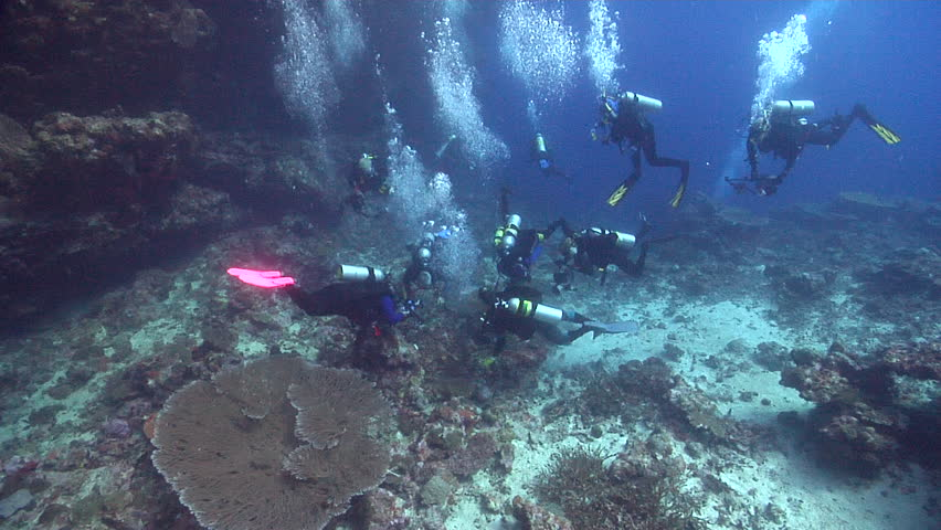 Chaotic hoard of scuba divers swimming on deep coral reef in Solomon Islands, HD, UP18781 | Shutterstock HD Video #19799341