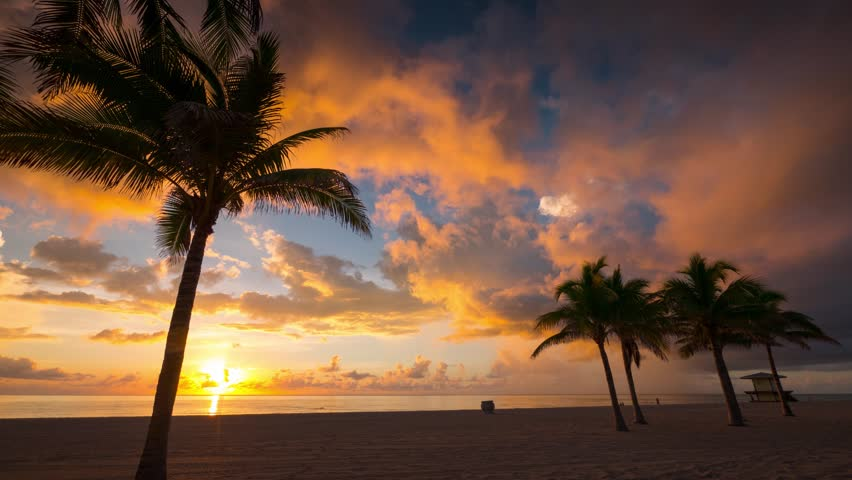 Beautiful sunrise with palm trees and beach in foreground in Hollywood, Miami, Florida. 4K UHD Timelapse.