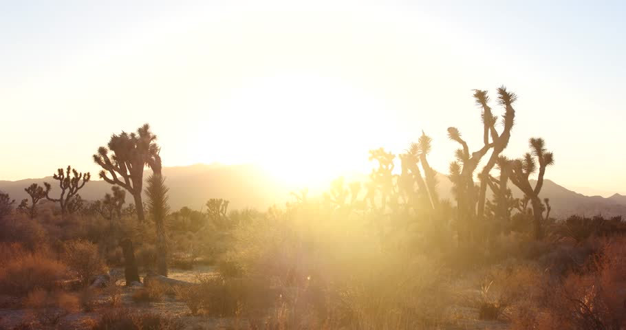 Beautiful Sunset Time Lapse of Joshua Trees in the California Desert