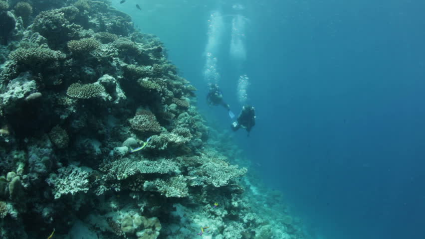 woman and man diving and looking at coral reef