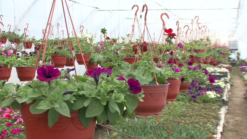 Hanging Flower Pots In The Nursery Stock Footage Video 20303059