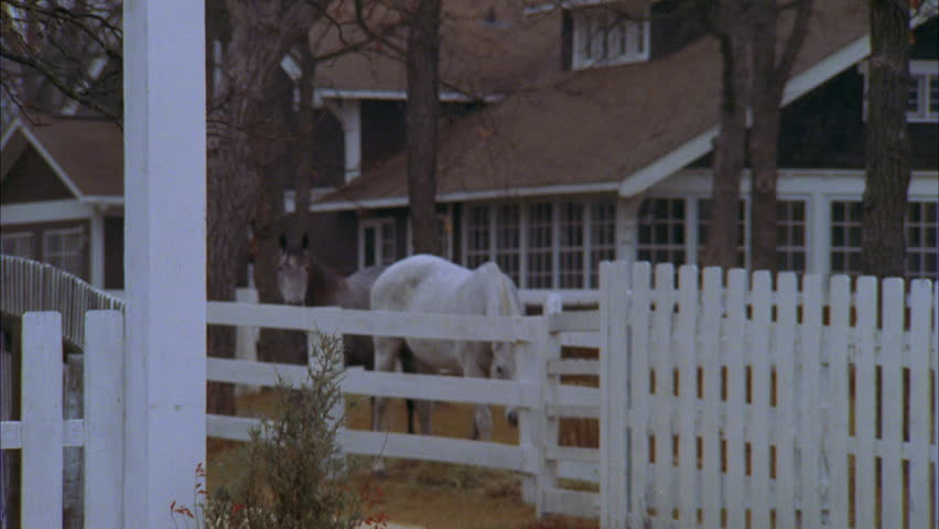 day tight nice wood shingled country house ranch house farm house, gray horse white horse coral then push tight horses both look up