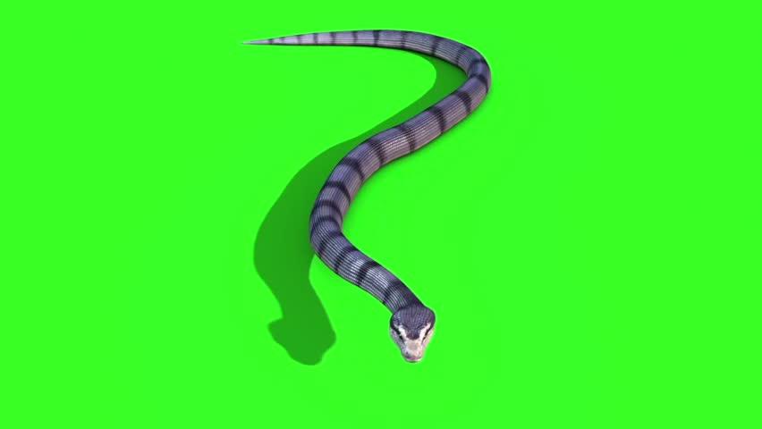 Snake Anaconda Top - Crawl Stock Footage Video (100% Royalty-free) 20378131  | Shutterstock