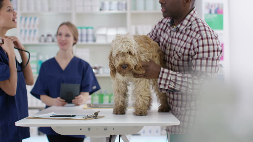 4K Veterinarian examining cute dog & talking to owner. Shot on RED Epic.