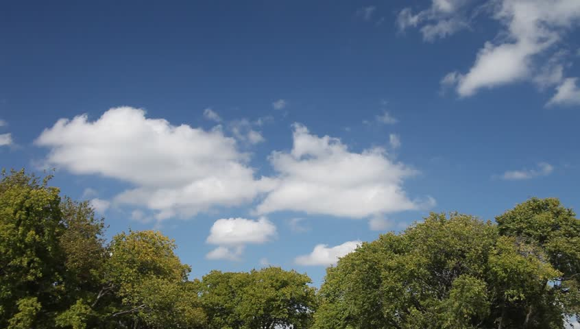 Beautiful blue sky and trees | Shutterstock HD Video #20499421