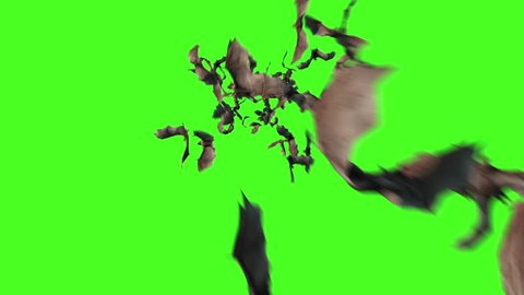 Flock of Bats Animals Halloween Green Screen