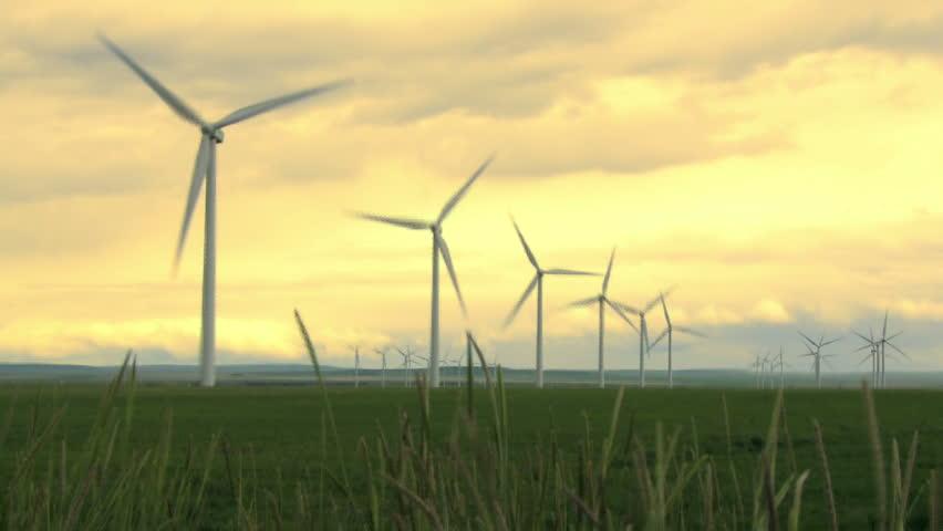 Wind Farm Turbines in wheat field
