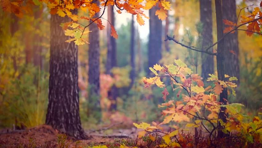 beauty nature autumn wwwpixsharkcom images galleries