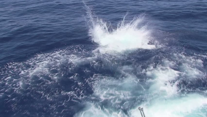 Sailfish jumping, sport fishing. Real sound with people shout.