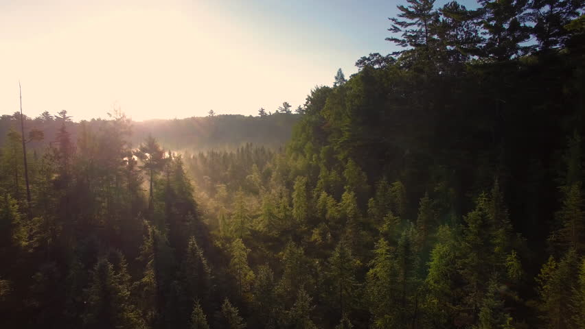 Aerial view flying low over mist and pine trees of northern Wisconsin at sunrise. | Shutterstock HD Video #20868718