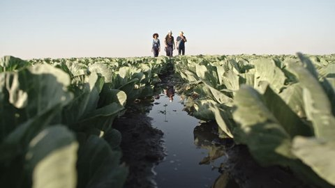 Ground angle shot of young farmers walking through cabbage field with puddles and wet soil