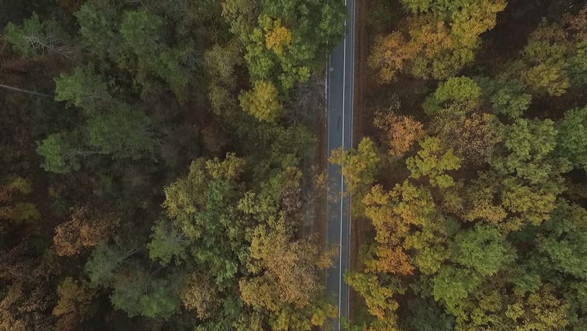 Aerial view of the colorful autumn forest.Look down on autumn forest.Aerial view on the way in the forest #20968471