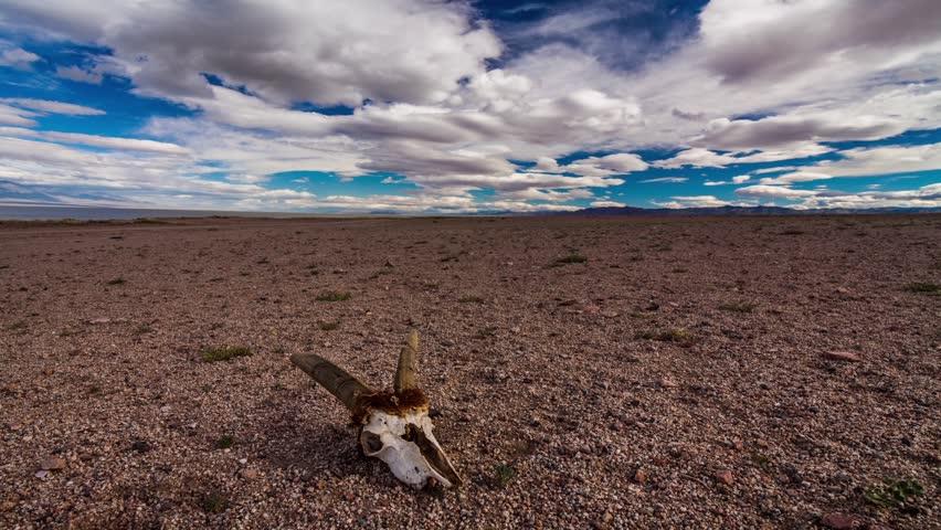 Skull of a dead animal in the Gobi Desert. Mongolia. Time Lapse