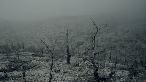 Pov walking view of a ravaged and burned out forest landscape in winter fog and mist.