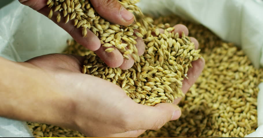 Toasted barley malt to make dark and light beer. concept of nature and creation of natural products such as beer and fresh hops. organic and natural malt for brewmaster | Shutterstock HD Video #21125071