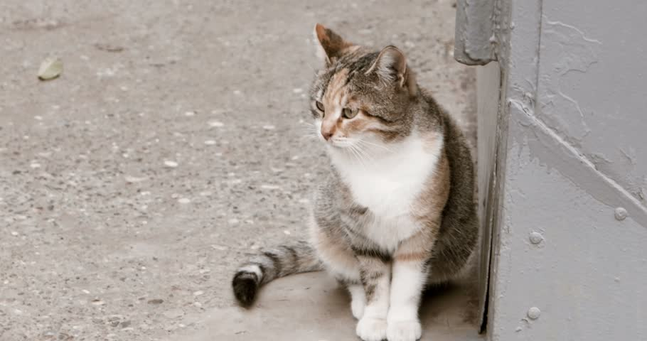 Homeless cat waiting in the street looking away. Tortoiseshell cat sitting on asphalt and waiting for food. Adoption concept.