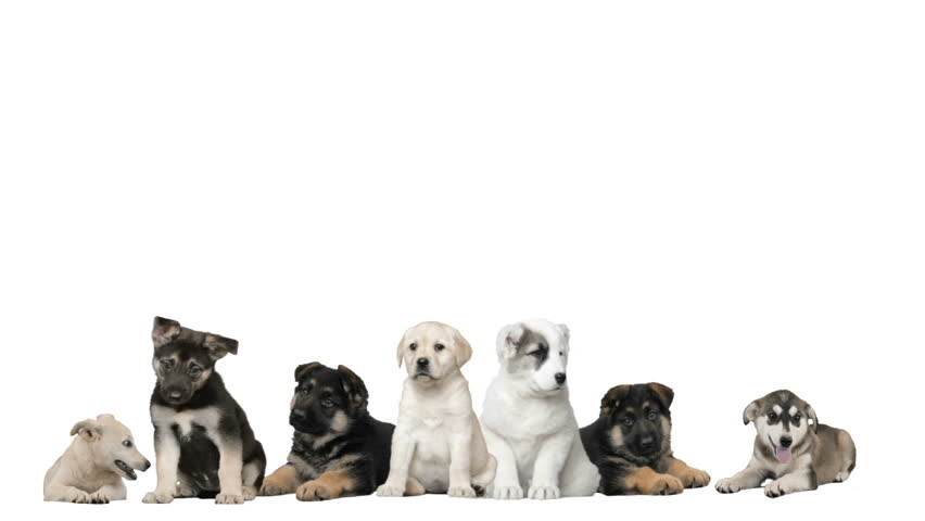 Group of pets sitting stock footage video 5108837 shutterstock funny dogs on a white background hd stock footage clip voltagebd Gallery