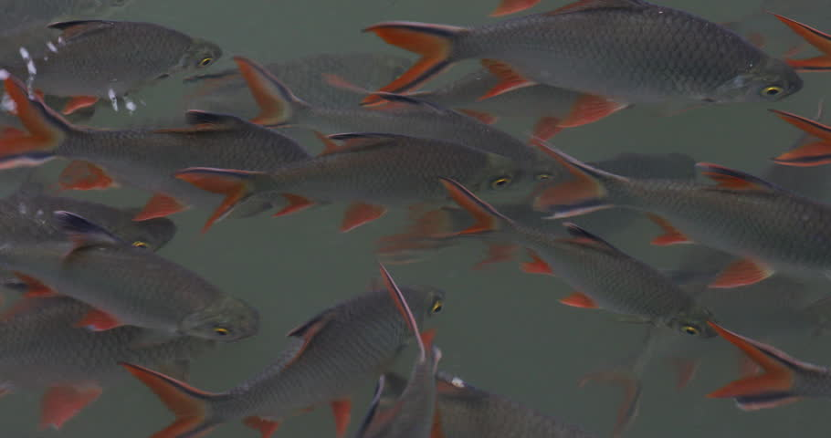 Group of fish close-up | Shutterstock HD Video #21828451