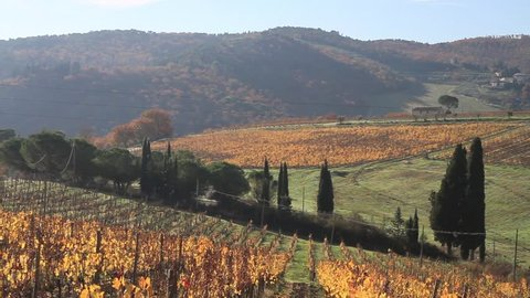 Greve in Chianti, November 2016: Pano of Chianti landscape with vineyard and cypressi in autumn, on November  2016 in Greve in Chianti, Florence, Tuscany, Italy