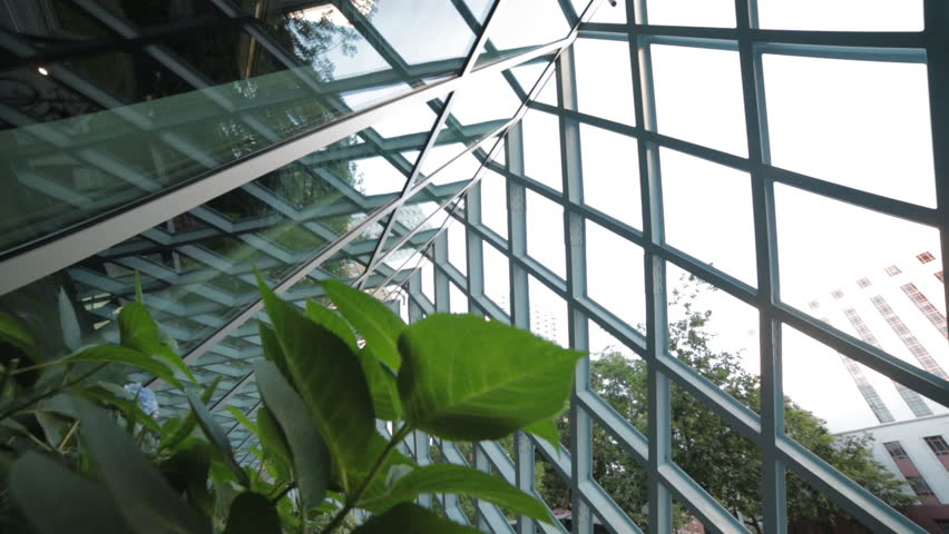 Contemporary garden: Camera dollies passed green plants at contemporary building location.