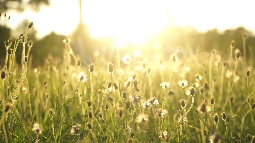 Fresh Grass Abstract Background, Bright Field With Sunny Bokeh ...