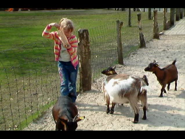 Girl almost attacked by goats
