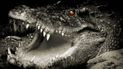 Crocodile With Glowing Eyes Opens Mouth