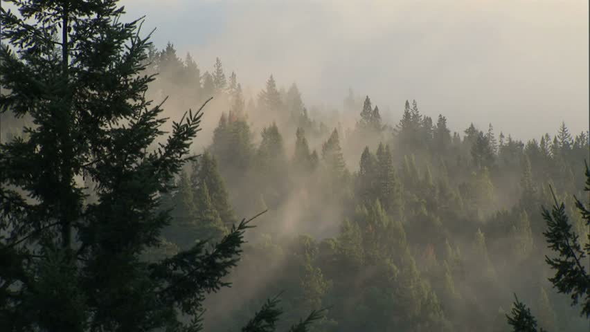 Timelapse of fog and trees