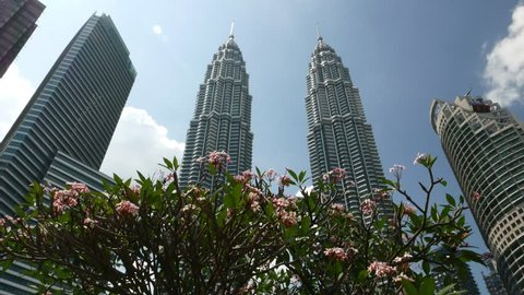 KUALA LUMPUR, MALAYSIA - FEBRUARY 27, 2015: Flowering plumeria tree against Petronas Twin Towers, dolly panning shot. Fresh pink blossoming frangipani tree, covered with many flowers, Camera move back