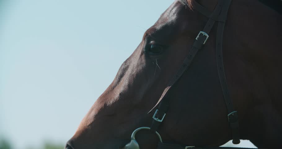 thoroughbred racing stallion horse close-up in slow motion #22390612