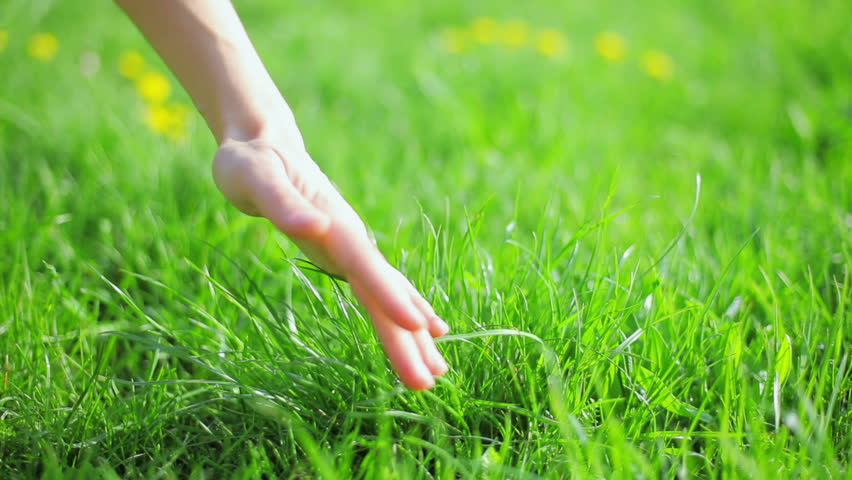 Fresh new green grass caressed by woman hand, closeup view