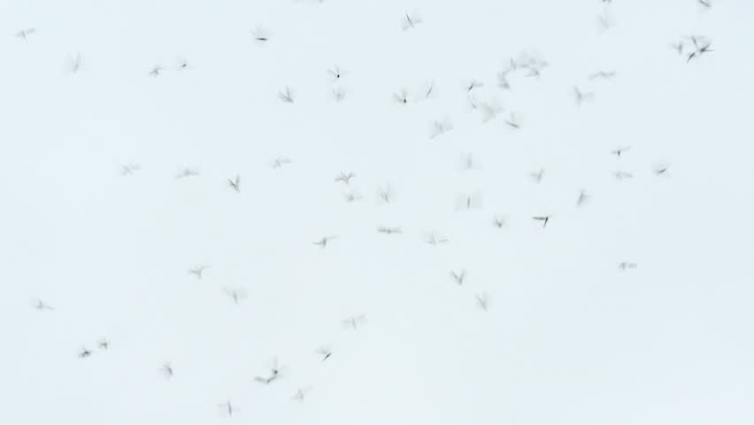 Swarm of mosquitoes against the gray sky #22434841