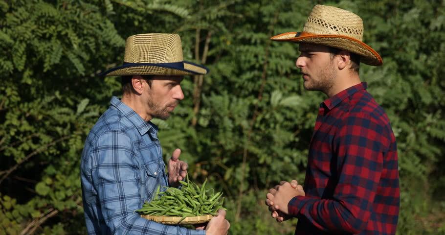 Confident Gardener Men Cooperation Hold Cucumbers Verify Quality ...