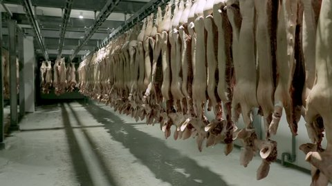Pork carcasses hanging on hooks in a meat factory. Pigs in slaughterhouse. Half pork hanging from the rail transport.
