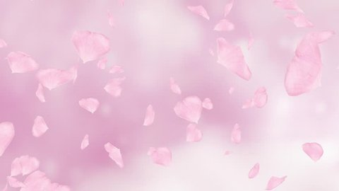 Falling and swirling pink rose petals or cherry tree blossoms. Spring slow motion HD animation, close up with blurred background. Japanese design.